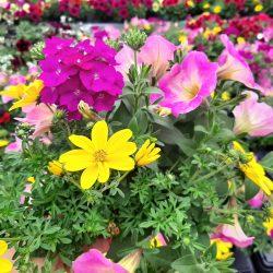 Fleurs de Printemps / été