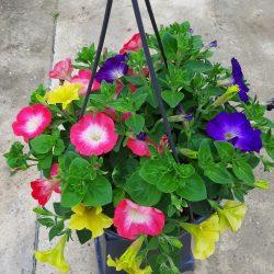 Suspension et potée fleurie