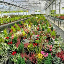 COUPES Florales Extérieures