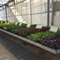 Végétaux pour Composition